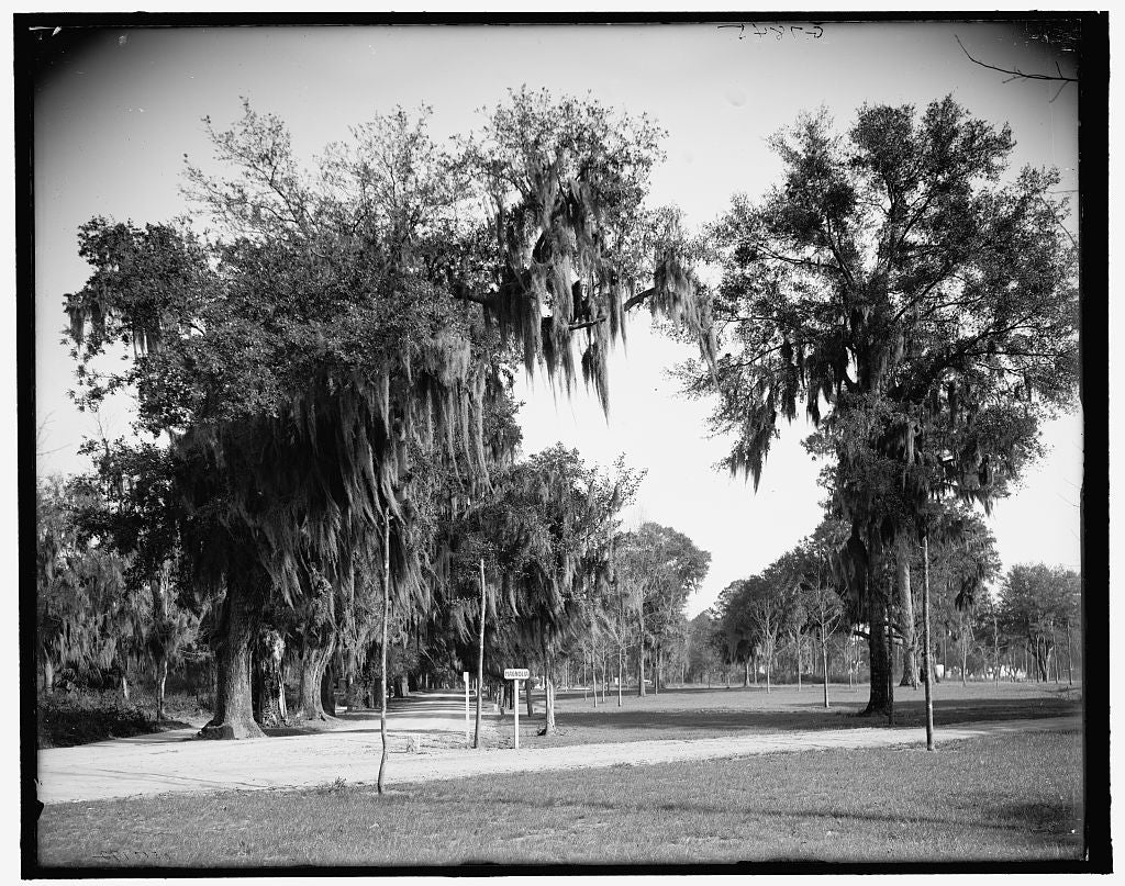 16 x 20 Gallery Wrapped Frame Art Canvas Print of Avenue of oaks Bonaventure Cemetery Savannah Ga  1908 Detriot Publishing co.  86a