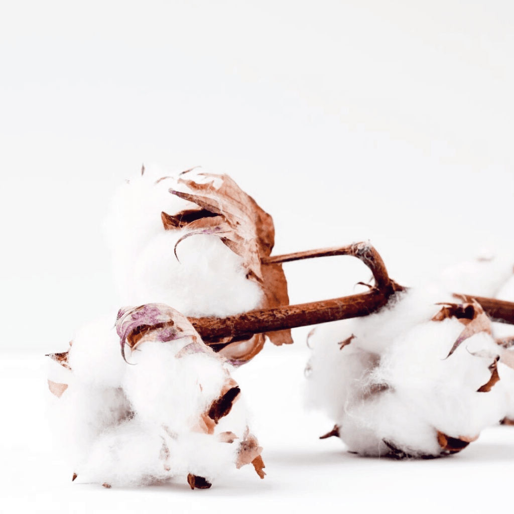 rayon vs cotton which fiber is best? more sustainable?