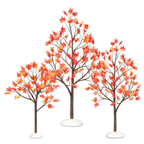 maple trees for village display