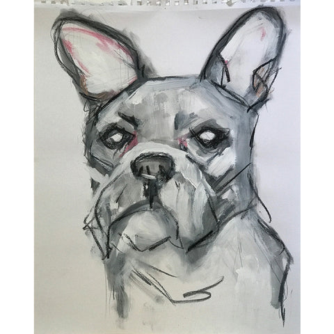 French Bulldog/Boston Terrier