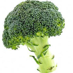 When to introduce broccoli to my baby?