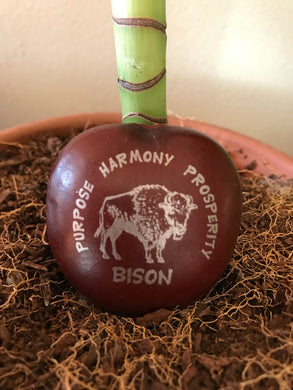 Bison Animal Totem Sea Bean