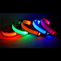 Pet Dog Cat Glow in the Dark LED Collar - Cach Best