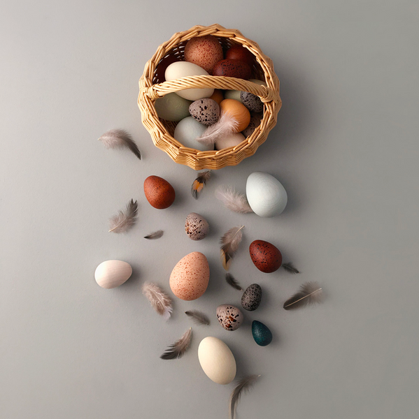 A Dozen Bird Eggs by Moon Picnic x Erzi
