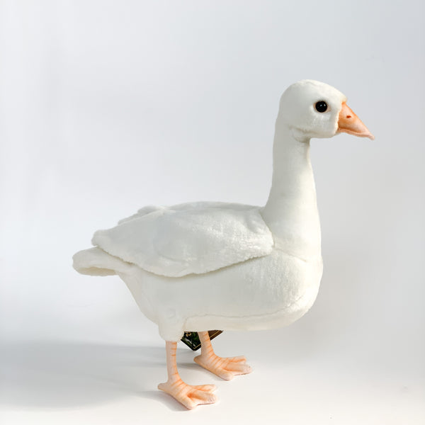 Young Duck White by Hansa