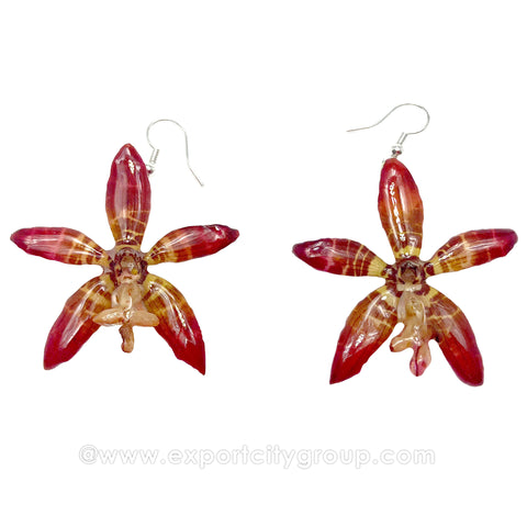 Staurochilus Fasciatus Bengal Tiger Orchid Jewelry Earring (Pink)