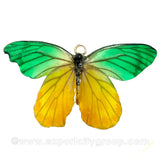 Real Butterfly Jewelry Pendant (BTF-013)