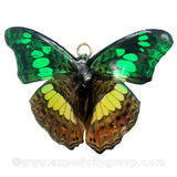 Real Butterfly Jewelry Pendant (BTF-007)