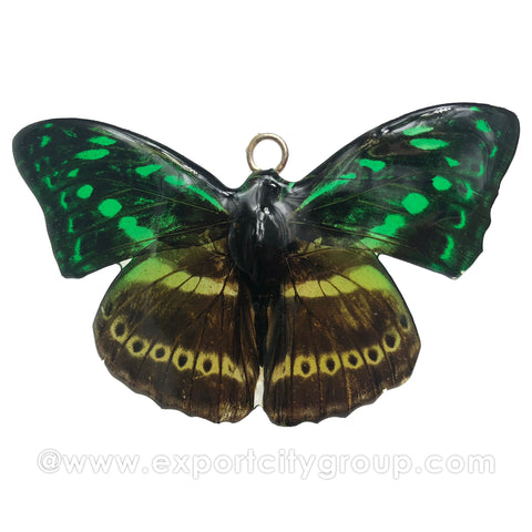 Real Butterfly Jewelry Pendant (BTF-006)