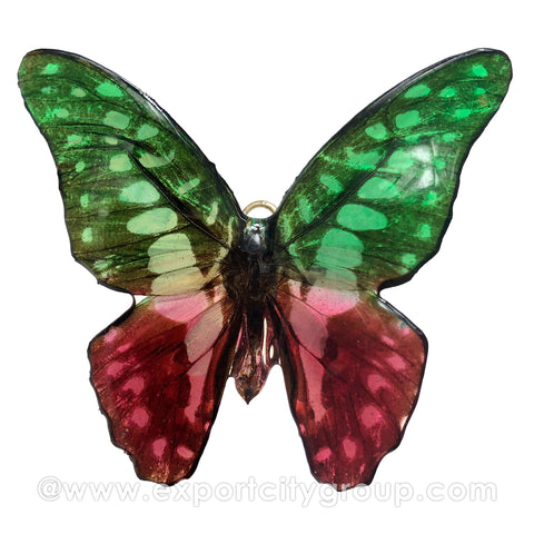 Real Butterfly Jewelry Pendant (BTF-004)