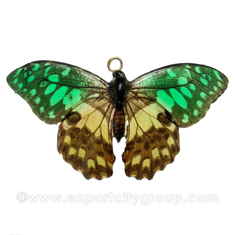 Real Butterfly Jewelry Pendant (BTF-015)