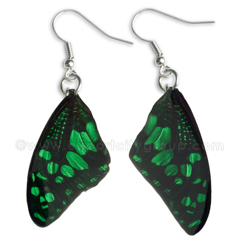 Real Butterfly Wings Jewelry Earring - WG01 Dyed Green