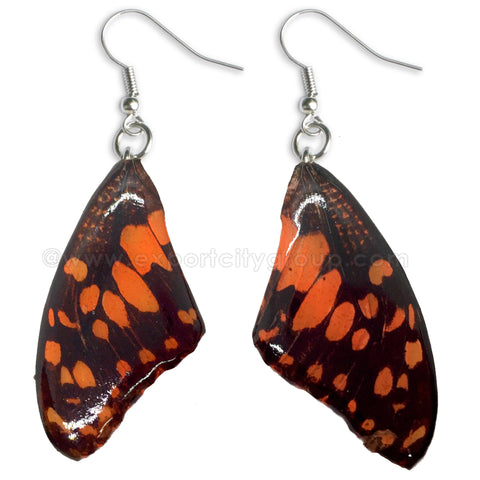 Real Butterfly Wings Jewelry Earring - WG01 Dyed Orange
