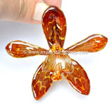 Tiger CAT Tiger Orchid Jewelry Pendant (Orange)