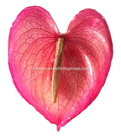 Anthurium Flower Jewelry 2-in-1 pendant/brooch (Pink)