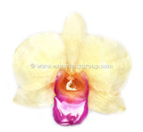 "Diamond ""Dendrobium"" Orchid Jewelry pendant (White)"