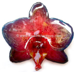 Phalaenopsis BLUME Orchid Jewelry Pendant (Red 2 Tone)