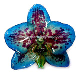 "Phalaenopsis FANCY ""Dotted"" Orchid Jewelry Pendant (Blue)"
