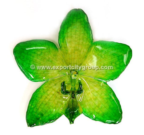 Phalaenopsis STAR Orchid Jewelry Pendant (Green)