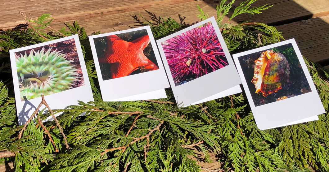 Glimpses of Ketchikan - Note Card Sets