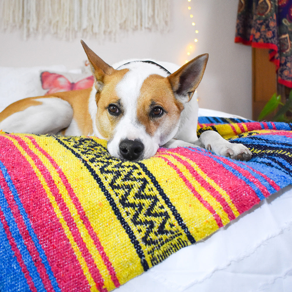 Even your fur babies will love laying on the Sunshine Day Dream Bohemian Fiesta Blanket.
