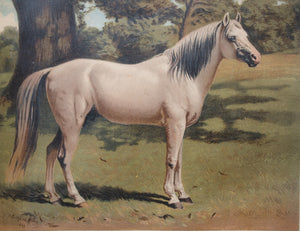 CHARLES .H.LUTYENS - The Arab Pony Charger