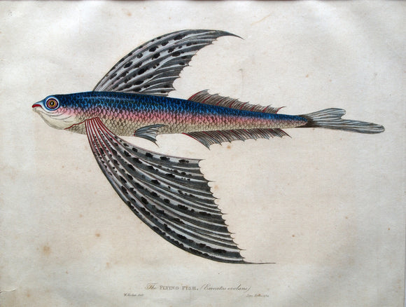 James Forbes - The FLYING FISH