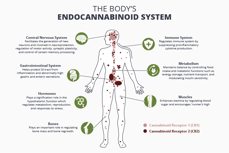 The Endocannabinoid System: A Bridge Between Body and Mind?