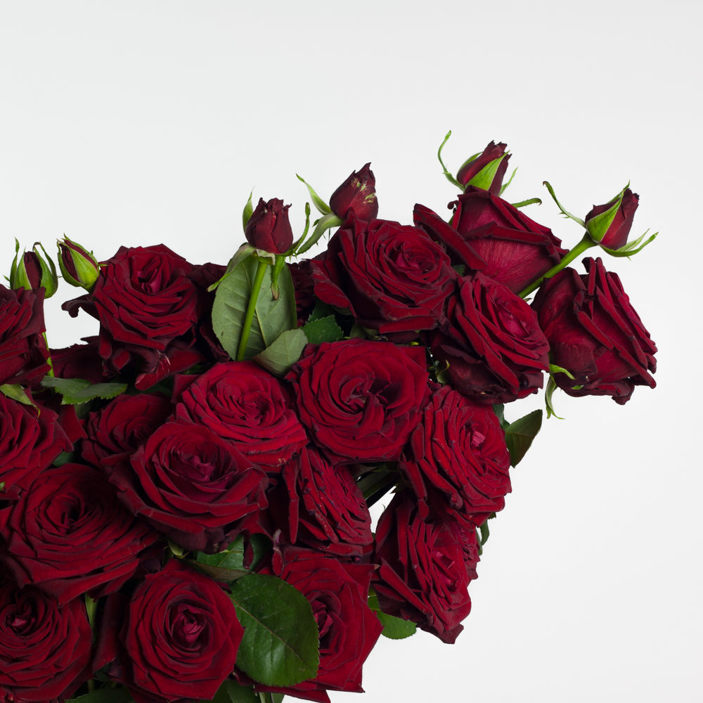 luxe red roses