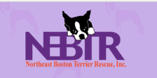 Northeast Boston Terrier Rescue- NEBTR