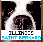 Saint Bernard Illinois Rescue