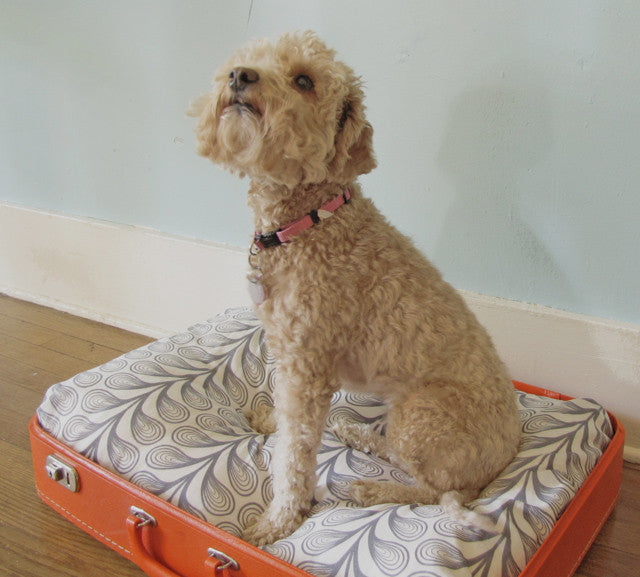10 Dog Beds For Pampered Pups