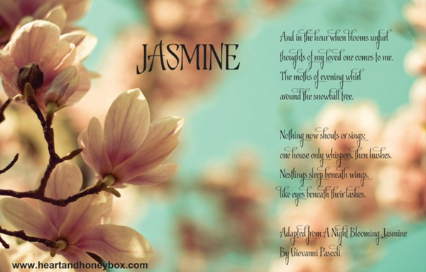 Our May Theme: Jasmine!