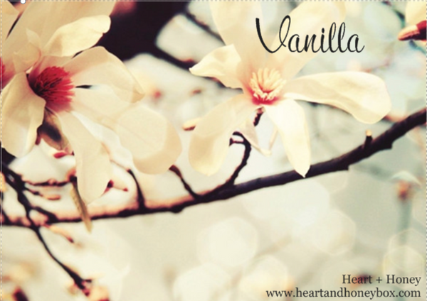 July Theme: Vanilla - An Aphrodisiac for the Ages