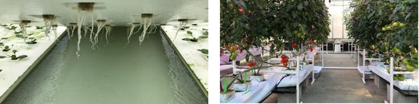 Hydroponic Water Culture Systems