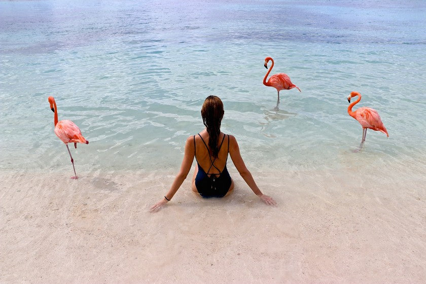 Aruba Mexico beach flamingo travel flamingos Riviera Coco