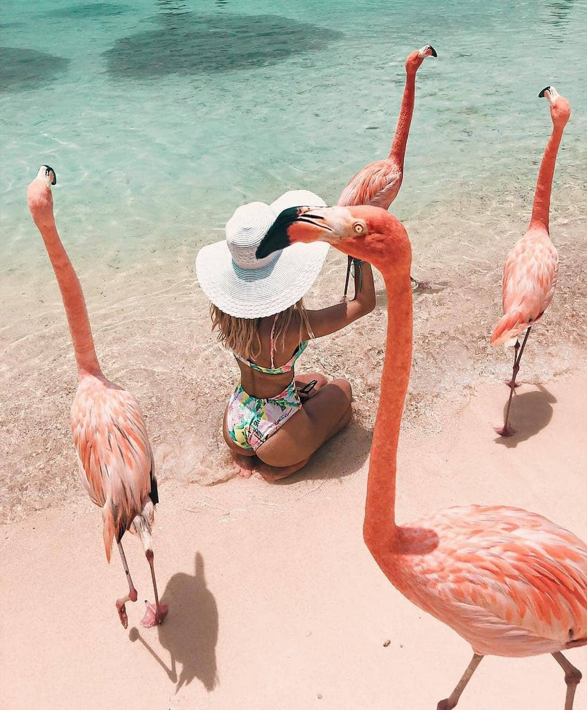 Aruba beach flamingo travel flamingos Riviera Coco