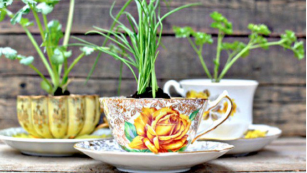 vintage tea cup as pot