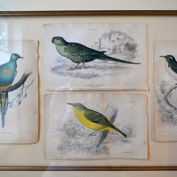 French Antique Framed Hand Colored Prints of Birds in Gold Frame