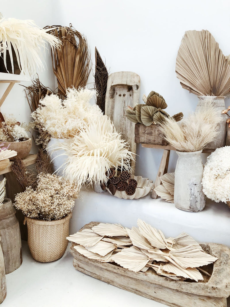 Discover Dried Flowers