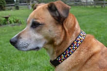 Dot Beaded Dog Collar