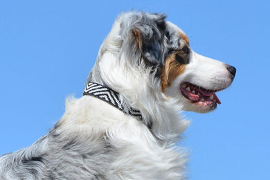 Zebra Beaded Dog Collar