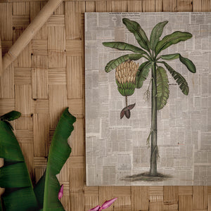 Vintage banana tree with Print Painting