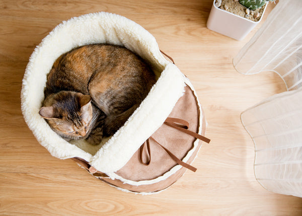 top view of the moccasin bed with a cat sleeping in it