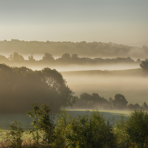North Downs countryside on a misty morning in the county of Kent UK where the studio of Wild Planet Aromatherapy is situated