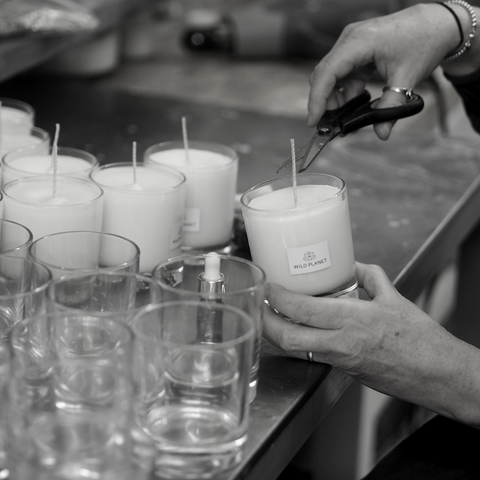 Black and white image of Luxury Scented Candles on metal work bench with pair of hands snipping natural cotton wicks next to empty candle glass containers