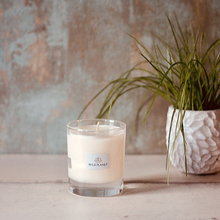 Wild Planet Products 220g Limelight aromatherapy candle on table next to plant in stone container