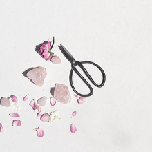 Fresh pink petals with scissors and rose quartz crystals on white background