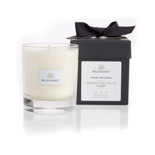 Orange Blossom scented candle next to black box with ribbon by Wild Planet Products
