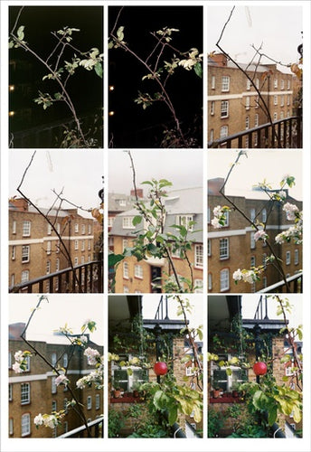 Process (Apple Tree), 2012